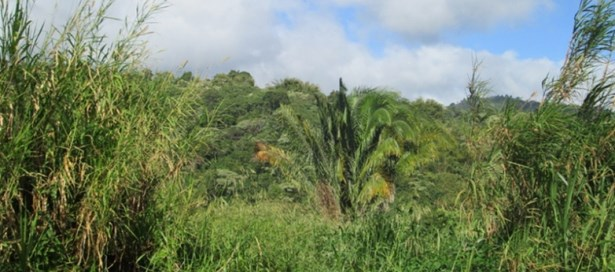 Residential Land For Sale Maraval (photo 1)
