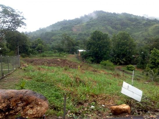 Lovely 1/2 Acre Homestead land, Arouca (photo 4)