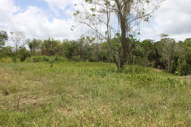 Beautifully landscaped 57,845 square feet parcel of land for sale. (photo 5)