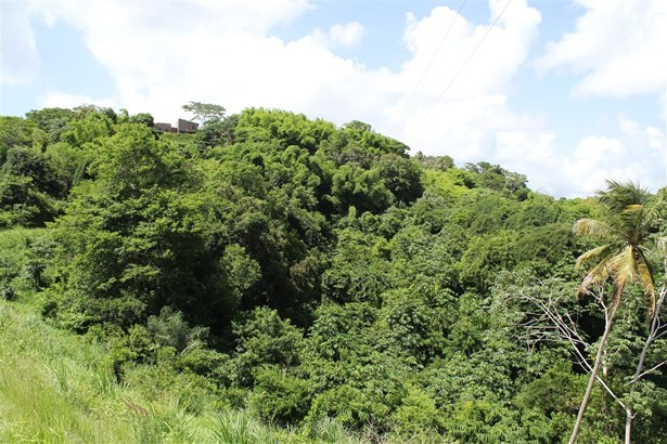 Freehold Land For sale Orange Hill (photo 3)