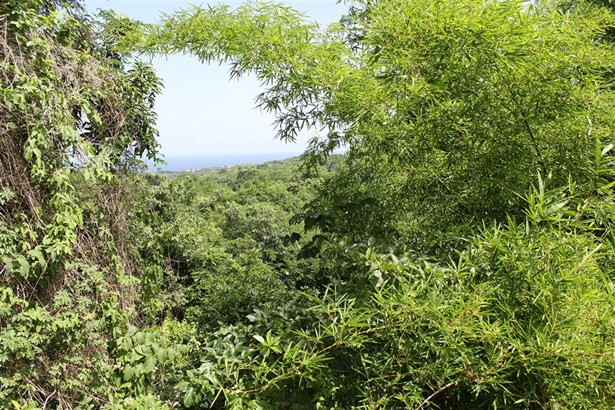 Freehold Land For sale Orange Hill (photo 4)
