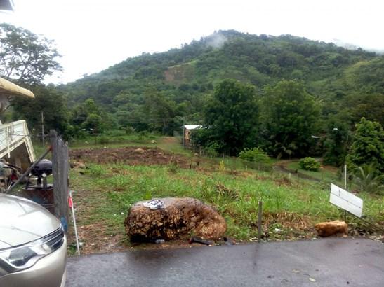 Lovely 1/2 Acre Homestead land, Arouca (photo 3)