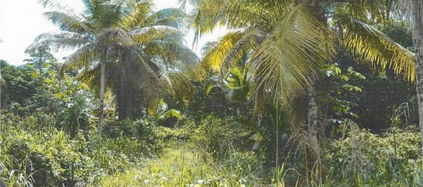 Agricultural Land For Sale Arima (photo 3)