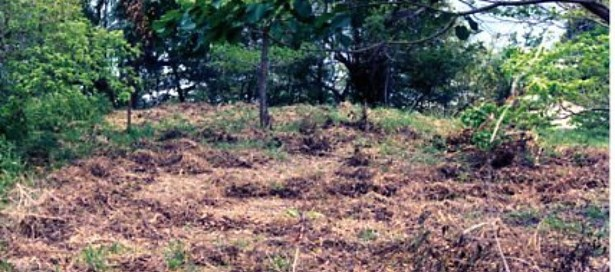 Land For Sale Toco (photo 1)