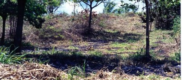 Land For Sale Toco (photo 2)