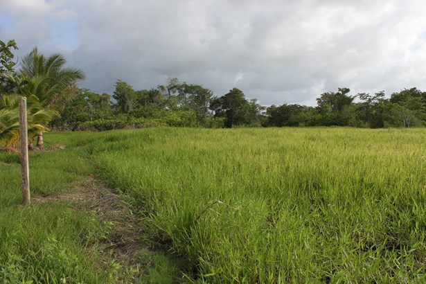 1 Acre of Land located on Boy Cato Road, Las Lomas (photo 1)