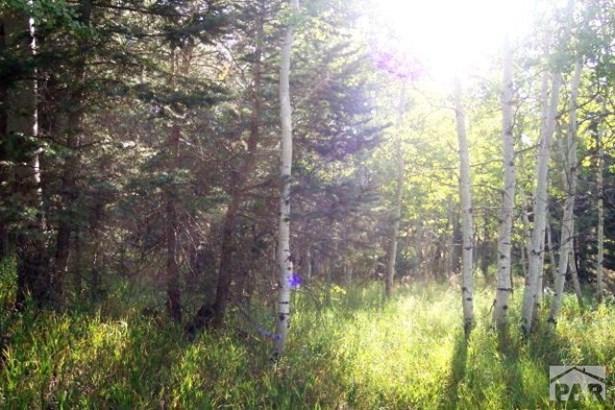 Single Family Land - Rye, CO (photo 4)
