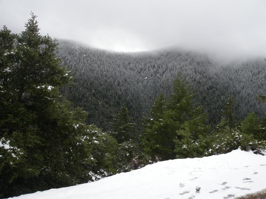 0 Bull Creek Rd , Wilderville, OR - USA (photo 3)