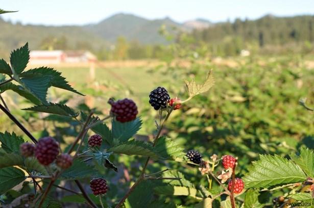 3405 Nirri Ln , Tillamook, OR - USA (photo 5)