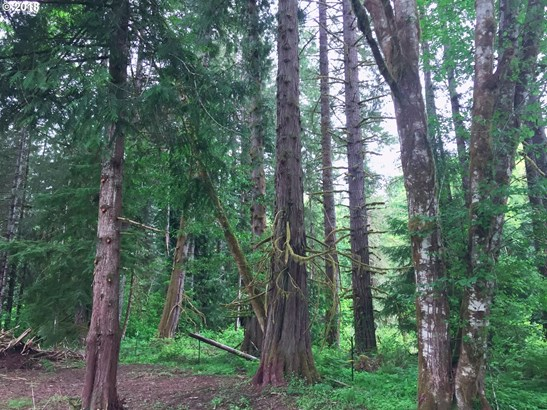Timber Rd , Vernonia, OR - USA (photo 4)
