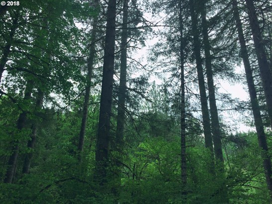 Timber Rd , Vernonia, OR - USA (photo 5)