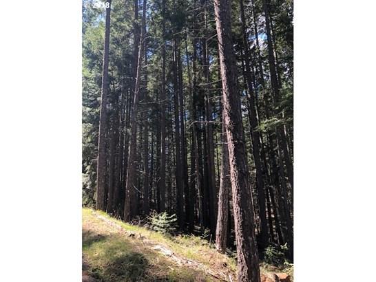 Forest Path  1, Lyle, WA - USA (photo 2)