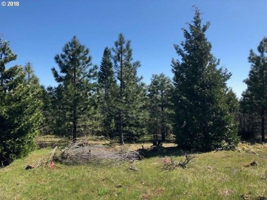 Forest Path  1, Lyle, WA - USA (photo 3)
