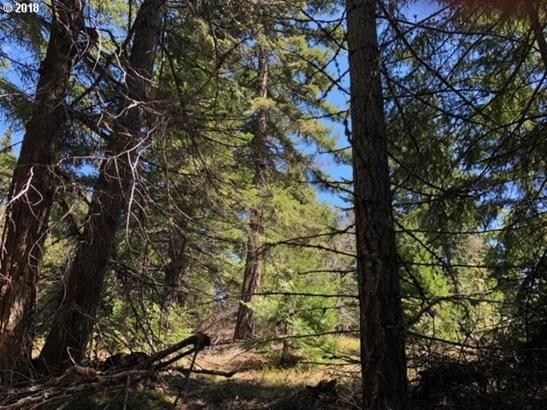 Forest Path  1, Lyle, WA - USA (photo 4)