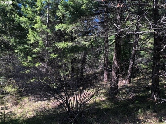 Forest Path  1, Lyle, WA - USA (photo 5)