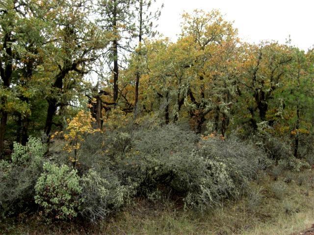 0 Danconia Dr , Trail, OR - USA (photo 4)