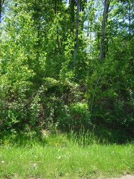 Nice sized lot with water access!Some nice sized trees on the lot. (photo 1)
