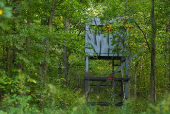 There is a  deer blind already established on the property.  It has allowed plenty of trophy deer to be taken from this spot. (photo 2)