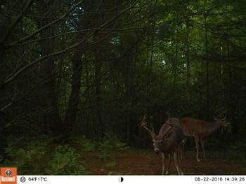 W  Stewart, Shepherd, MI - USA (photo 5)