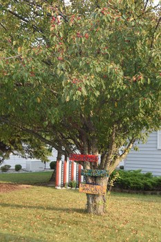 The yard has many mature trees that provide plenty of shad and add privacy to the yard. (photo 2)