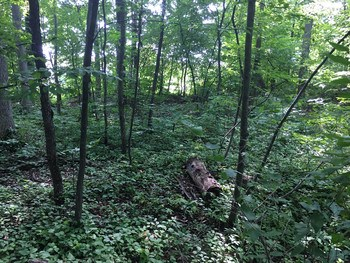 Wooded dry lot. (photo 2)