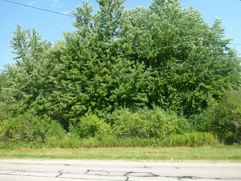 Wooded 3/4 acre building site (photo 1)