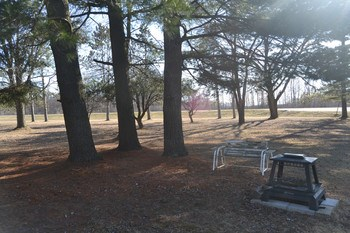Front yard view from the living room!  A great relaxing view right from you main living space.  The yard contains apple trees that the deer love to feast on.  You can enjoy the wildlife right in your own yard. (photo 3)