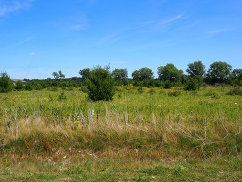 Nice 2 acre building site in a quiet Freeland location. (photo 1)