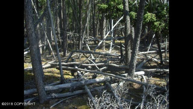 L15 B2 Wood Circle, Copper Center, AK - USA (photo 4)