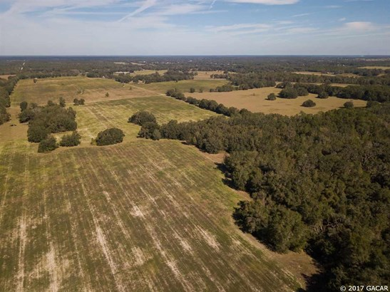 Agricultural - Williston, FL (photo 4)