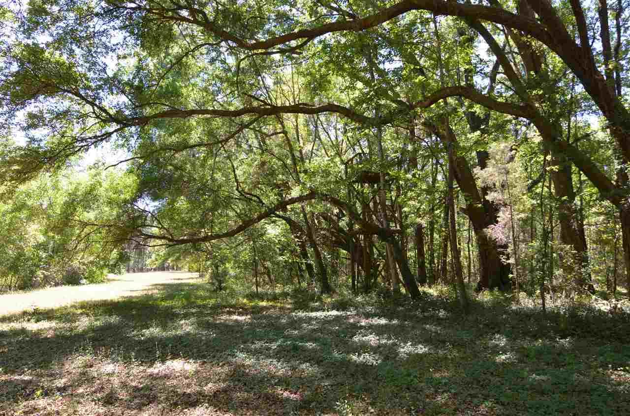 Timberland - Alachua, FL (photo 5)