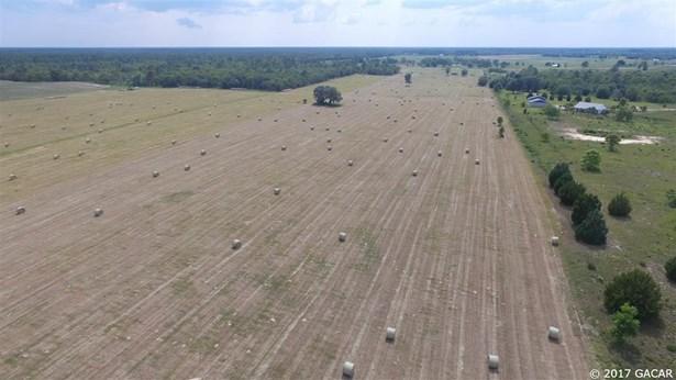 Agricultural - Bronson, FL (photo 4)