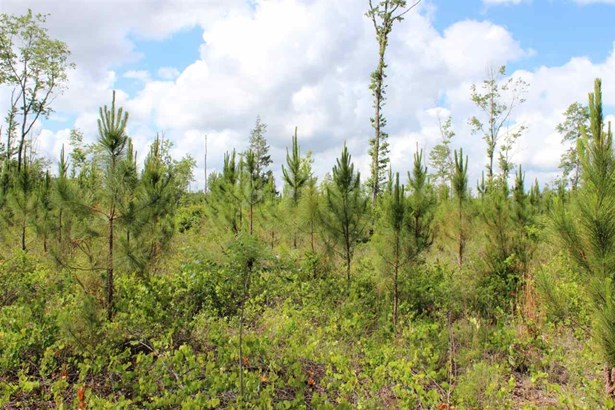 Timberland - Gainesville, FL (photo 1)