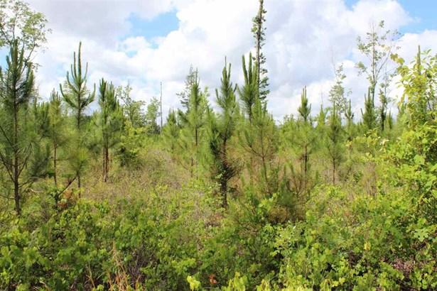 Timberland - Gainesville, FL (photo 2)