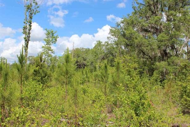 Timberland - Gainesville, FL (photo 3)