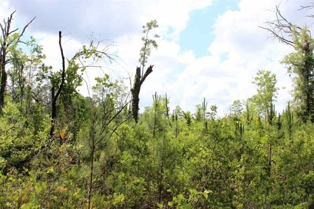 Timberland - Gainesville, FL (photo 5)