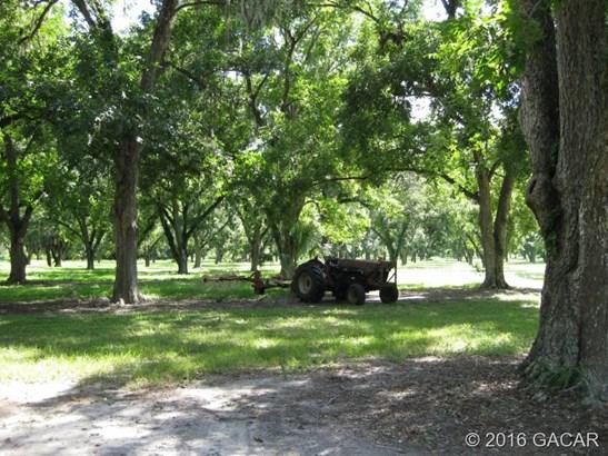 Farm, Other - Waldo, FL (photo 5)