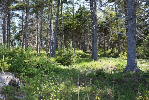 Lot 4 Island Road Extension, Malagash, NS - CAN (photo 3)