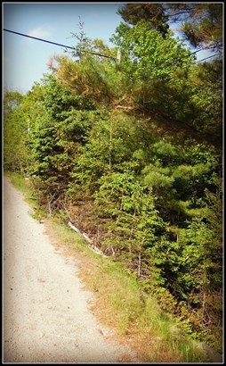 Lot 10 Highway 3, Chester Basin, NS - CAN (photo 2)