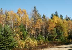 Lot 102 Lakewood Drive, Chester Grant, NS - CAN (photo 2)