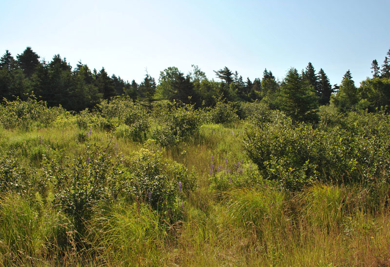 Lot 2 Amys, Hackett's Cove, NS - CAN (photo 2)