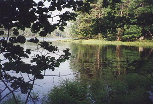 Lot 35a Forest Point Loop, Labelle, NS - CAN (photo 2)