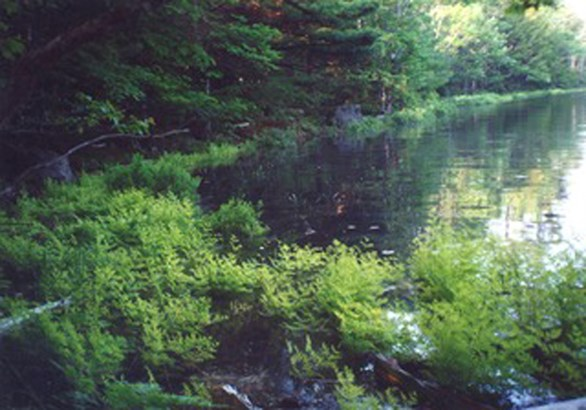 Lot 35a Forest Point Loop, Labelle, NS - CAN (photo 4)
