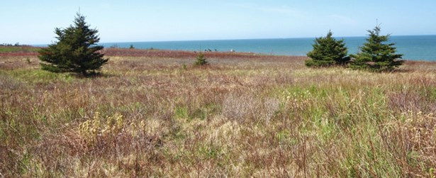 Lot 2 Baseline Road, Cape St Mary, NS - CAN (photo 4)