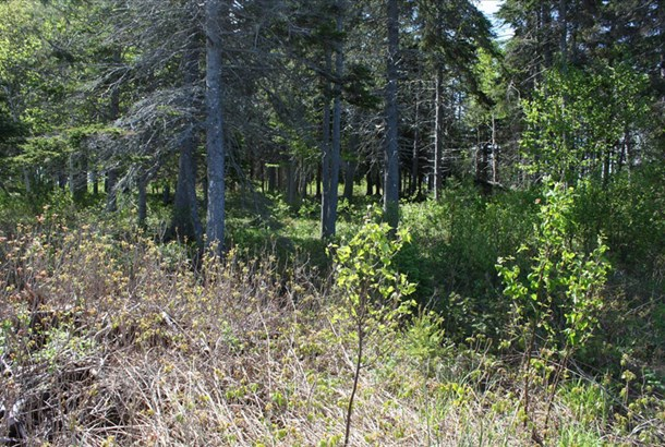 Lot 1 Island Road Extension, Malagash, NS - CAN (photo 5)