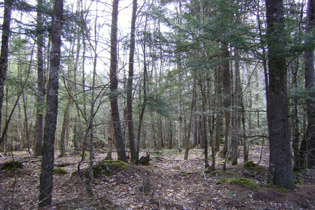 Lot 49 East Covey Lake Road, Maitland, NS - CAN (photo 2)
