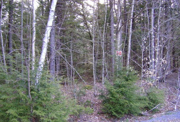 Lot 34 East Covey Lake Road, Maitland, NS - CAN (photo 2)