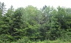 Lot 14 New Harbour Road, New Harbour, NS - CAN (photo 1)