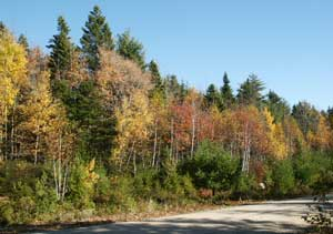 Lot 103 Lakewood Drive, Chester Grant, NS - CAN (photo 2)