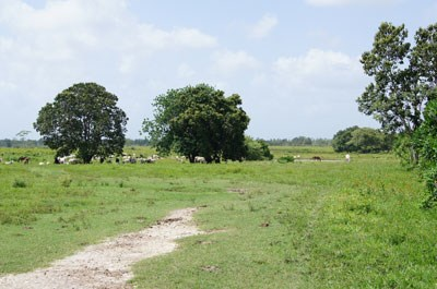 Old Northern Highway, Carmelita Village - BLZ (photo 4)